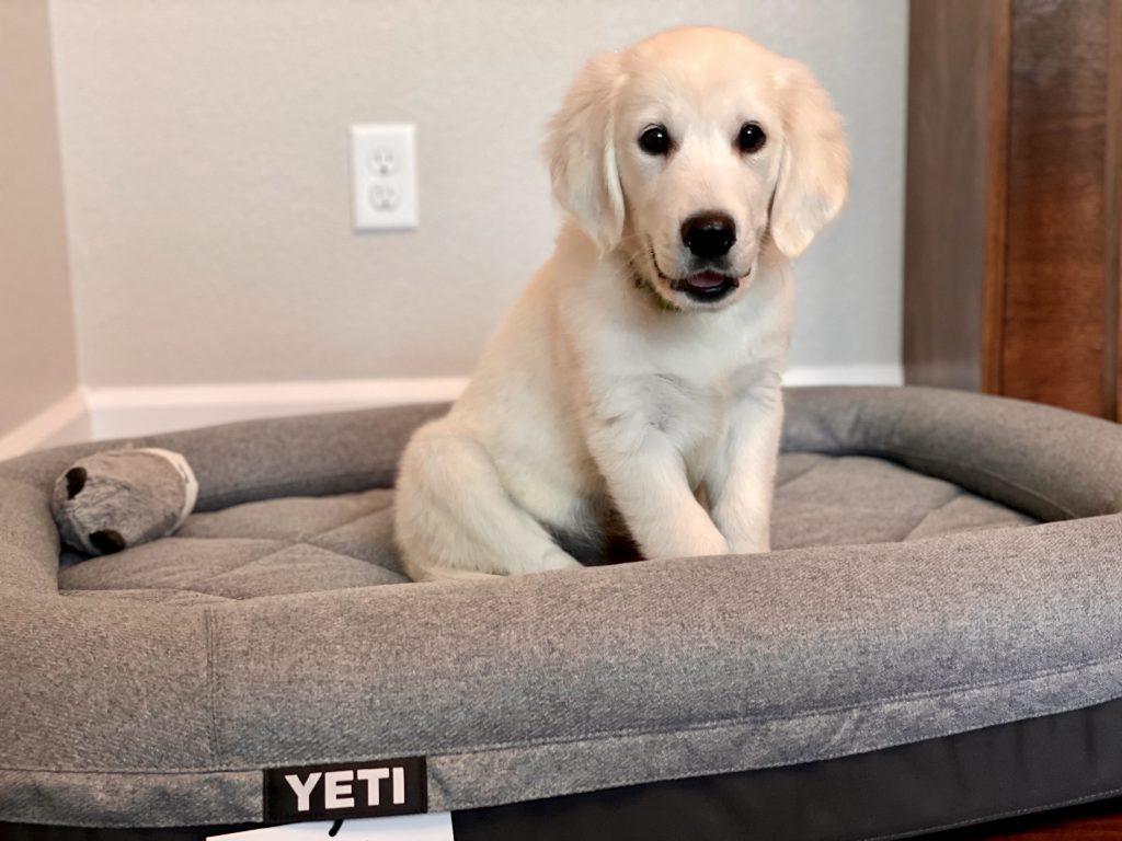 Yeti Trailhead Dog Bed